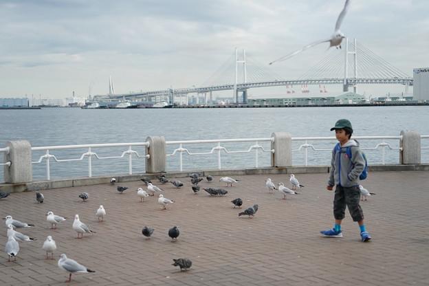 Photos: 冬の山下公園