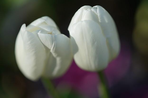 ホワイトドリーム