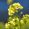 Photos: 葉の花