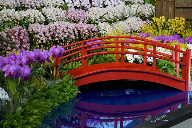 橋と蘭のディスプレイ