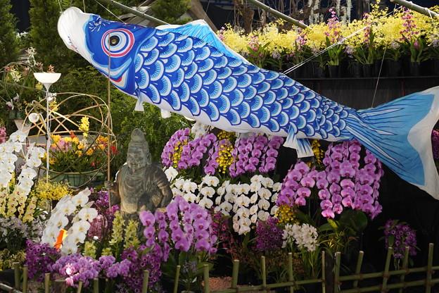 鯉のぼりと蘭のディスプレイ