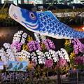 蘭と鯉のぼりのディスプレイ