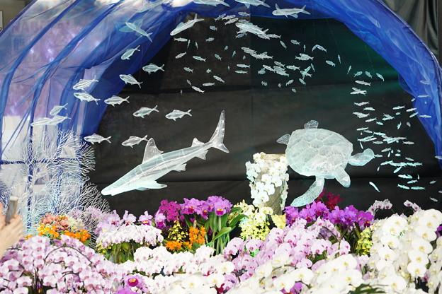 蘭と水族館のディスプレイ