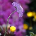 Photos: 冬の花壇