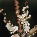 Photos: 米良
