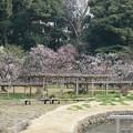 Photos: 冬の小石川後楽園