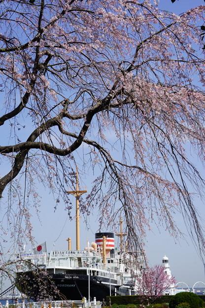 桜と氷川丸