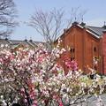 花桃と赤レンガ