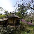 Photos: 早春の横笛庵