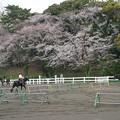 乗馬練習場