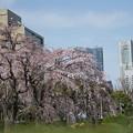 早春の山下公園