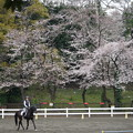 Photos: 桜と馬