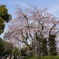 Photos: 早春の山下公園