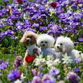 Photos: 三匹の犬