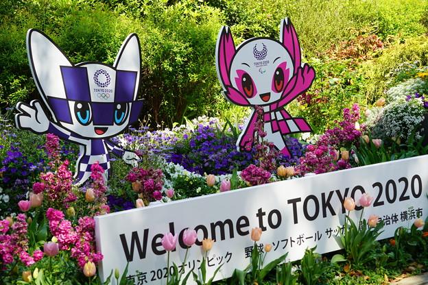 横浜市庁舎花壇