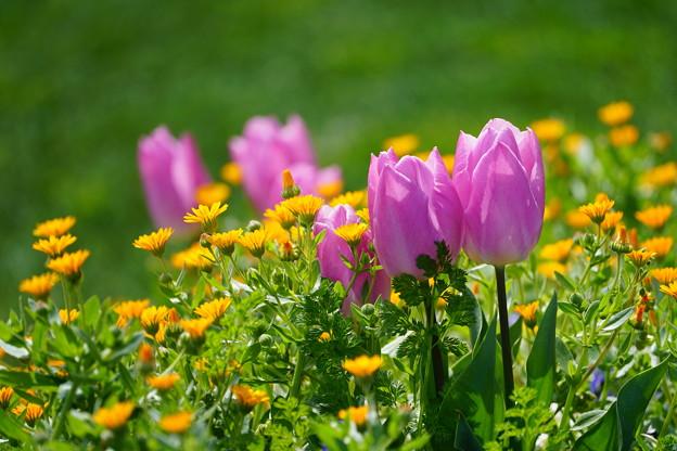 花壇の花々