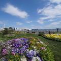 春の山下公園