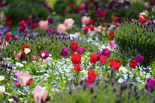 山下公園花壇の花々