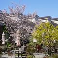 Photos: 春の横浜イングリッシュガーデン