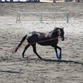 Photos: 馬の調教