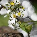 Photos: 川辺の花