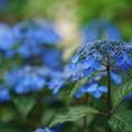 Photos: 藍姫