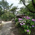 Photos: 三渓園外苑