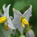 Photos: 初夏の花