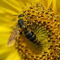 Photos: 蜂
