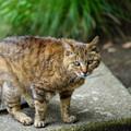 Photos: 三渓園の野良猫