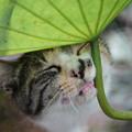 Photos: 蓮と野良猫