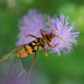 Photos: 昆虫