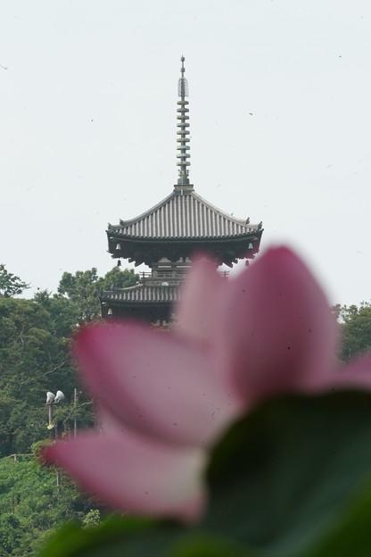 蓮と三重塔