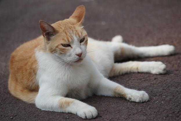 三渓園の猫
