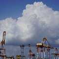 Photos: キリンと雲