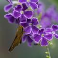 Photos: 蝶とジュランタ