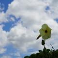 Photos: 花と雲
