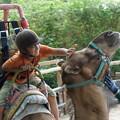 ラクダに乗る少年