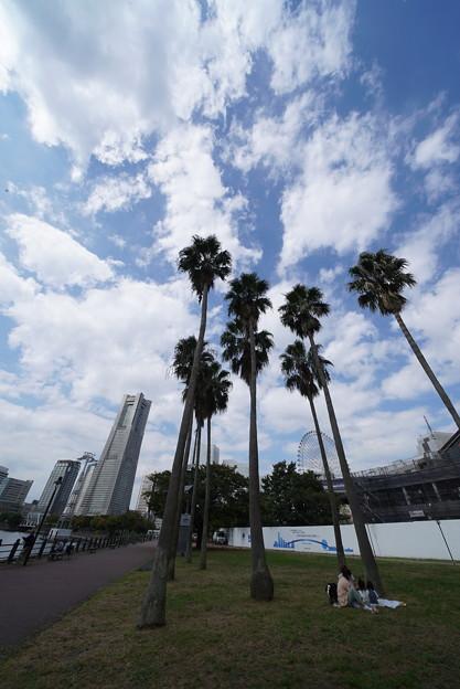 Photos: 椰子とランドマーク