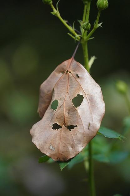 ハロウィン葉っぱ