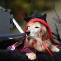 Photos: ハロウィン犬