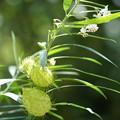 Photos: 花と実