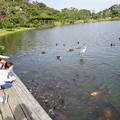 三渓園大池