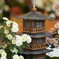 Photos: 小菊盆栽