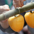 Photos: 干し柿作り