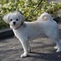 Photos: 3歳雌犬