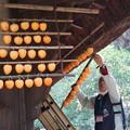 Photos: 干し柿干し