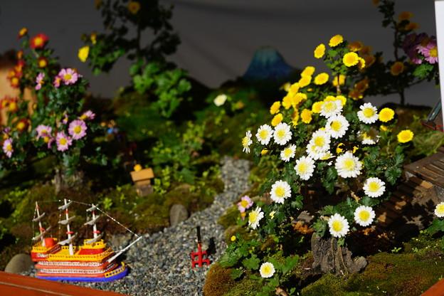 小菊盆栽展