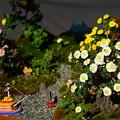 Photos: 小菊盆栽展