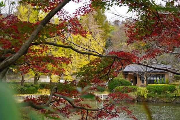 三ッ池公園の秋